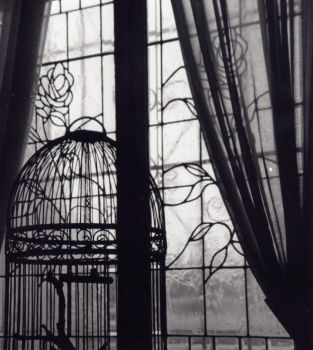 Bird Cage by Farrago