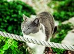 Great kitty of Acropolis by llllollll