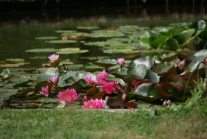 view to waterlilies 2 by ingeline-art