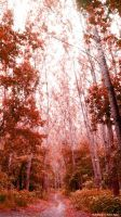 Red forest by FloraWhite