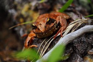 Frog 1 by nezumi-photography