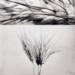 Wheat by NNarcissus