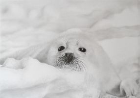 baby seal by momojj