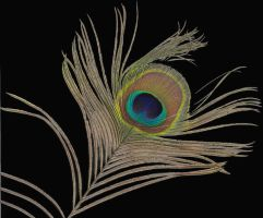 Peacock Feather by PaulineMoss