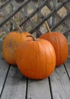 Trio of pumpkins 3 by LucieG-Stock