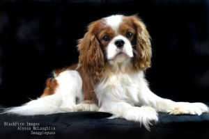Snaggle Black Backdrop by BlackFireImages