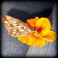 Butterfly by Vanhya
