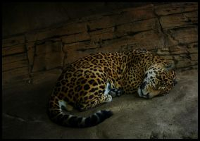 Jaguar, safe retreat by oOBrieOo