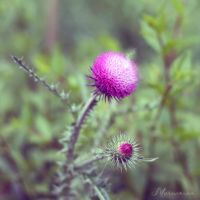 Tenderness of a prickle. by mechtaniya