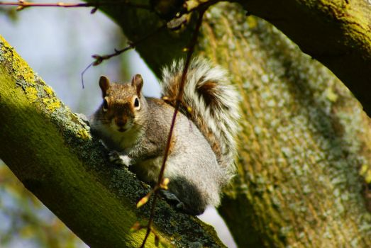 Have u got some nuts ?? by AnneClaire88