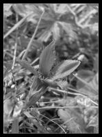 Black and white 2 by 99-in-the-shade