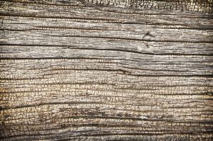 Free Wood Texture STansbury Is by houstonryan