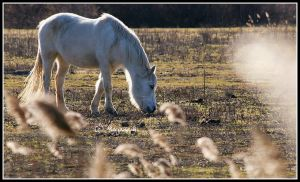 horse III by moem-photography