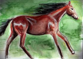 Running Horse by philippeL