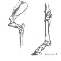 The bones of the thoracic limb by Fezti