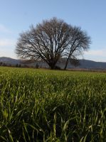 Greeny Grass by AmeenS