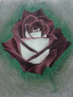 Red and White Rose by DemonRed6