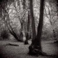 Haunted Woods by Mohain