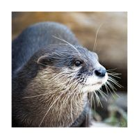The smallest otter by XanaduPhotography
