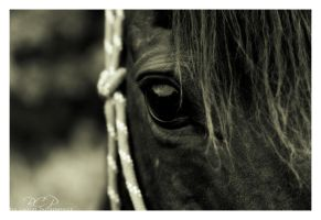 Gentle Eye II by BigCountryGraphix