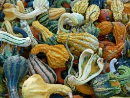 Gourdian Knot II by magpie-poet