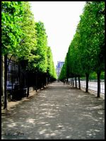 Trees in Paris by kiwineen