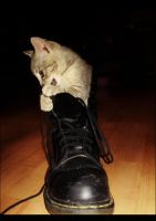 Small cat in BIG shoe by KissOnTheRain