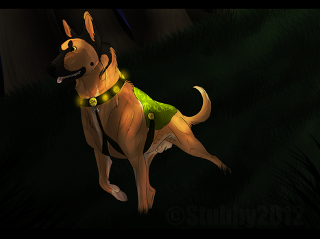 STS Showdown - Field Tracking - Oreo by Stubborn-Dog-Kennels