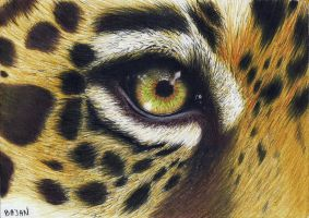 Leopard eye by Bajan-Art