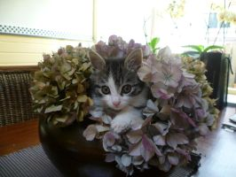 cat in a plant by NeroLovesCynder