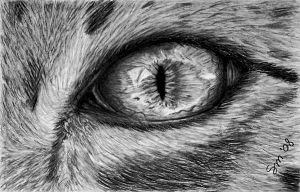cats eye by photonline