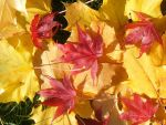 The Colors Of Autumn by ciarramist1027