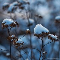 Touch Of Winter IV by JoannaRzeznikowska
