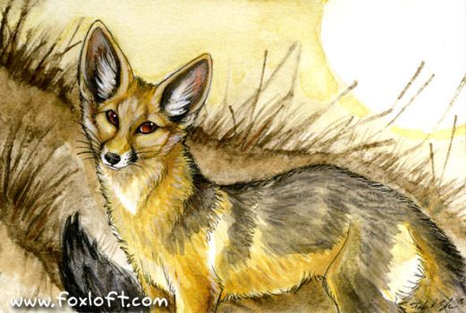 Cape Fox by Foxfeather248
