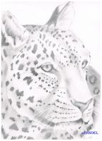 Leopard/Jaguar by DEANJENO--art