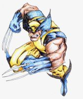 Wolverine by libran005