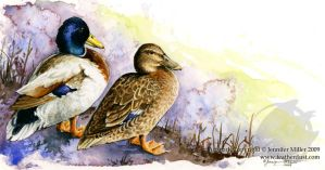 Mallard Pair by Nambroth