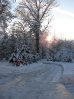 Wisconsin Woods Winter Road 3 by FantasyStock
