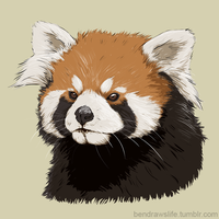 Red Panda by bensigas