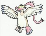 5D3SA Day 3: Youngster Mega Pidgeot by jed251