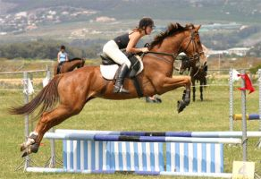Horse jump by roblith
