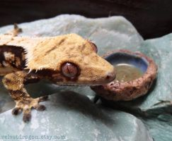 Crested Gecko Juxtaposed with Geode Bowl by tser