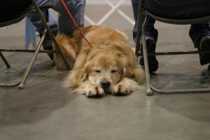 Napping at ringside RCC by DreamEyce