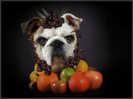 Fruity dog .. by fisher57