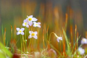 Tiny Flowers, Tiny World by Moon-Willow