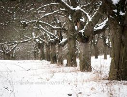 Winter plantation by Vampirbiene