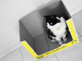 Cat in the box. by addikD