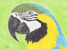 Blue and Gold Macaw by selector67