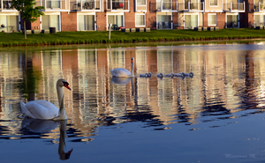The Swan Family by LenSpirations