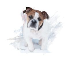 Bulldog In The Snow by ToriB